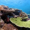 Giant Clams and Biofuel