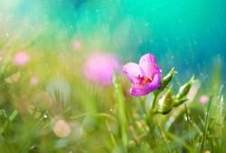 Selsey Rain Garden