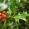Leave some holly for wildlife
