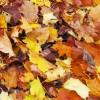 Autumn in Chichester Harbour