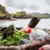 MPs Urge Supermarkets to Scrap Plastic Packaging