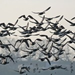 Special Protection Areas for Seabirds